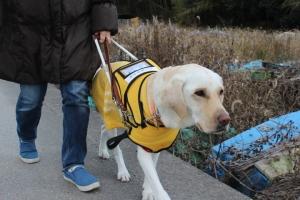 guidebag ― 盲導犬とユーザーのためのハーネス一体型ドッグバッグ ―
